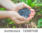wild blackberry in the hands....   Shutterstock . vector #733087438