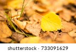 beautiful leaves on a tree in... | Shutterstock . vector #733091629