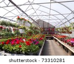 A greenhouse full of geraniums, hanging flowers and other flowering plants.. - stock photo