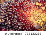close up oil palm fruits in... | Shutterstock . vector #733133293