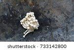 enoki mushrooms. enokitake.... | Shutterstock . vector #733142800