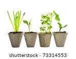 New Life  Little Green Plants...