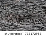 scorched grass land  in... | Shutterstock . vector #733172953