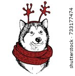 husky's dog  in a knitted red... | Shutterstock .eps vector #733177474
