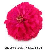 Purple Gerbera Flower Isolated...