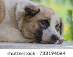 sleeping dog  select focus   Shutterstock . vector #733194064