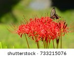 flower and butterfly | Shutterstock . vector #733215076