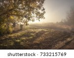 autumn view of the sun in the... | Shutterstock . vector #733215769