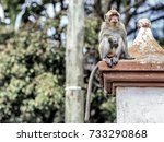 monkey resting in a small... | Shutterstock . vector #733290868