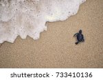 Baby Turtle Released For First...