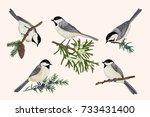 set of birds on coniferous... | Shutterstock .eps vector #733431400
