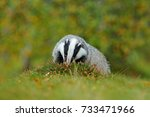 wildlife scene from nature.... | Shutterstock . vector #733471966