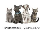 Stock photo dog and cat group of kittens and puppies sitting isolated on white 733486570