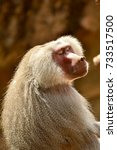 baboon | Shutterstock . vector #733517500