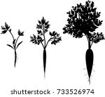 carrot growth stages.... | Shutterstock .eps vector #733526974