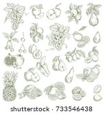 garden fruits. hand drawn... | Shutterstock .eps vector #733546438