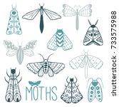hand drawn doodle moth vector... | Shutterstock .eps vector #733575988