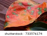 leaf of the persimmon  | Shutterstock . vector #733576174