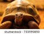 the aldabra giant tortoise ... | Shutterstock . vector #733590850