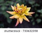 Yellow Flower In Botanical...