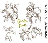 garden fruits  apples  apricots ... | Shutterstock .eps vector #733655326