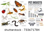 pet insects info graphic. house ... | Shutterstock .eps vector #733671784