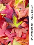 colorful of leaf in autumn... | Shutterstock . vector #733718134