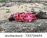 fallen flowers on a rock | Shutterstock . vector #733734694