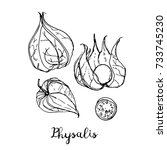 physalis. fruits drawn by a... | Shutterstock .eps vector #733745230