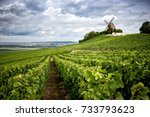 champagne. vineyard and... | Shutterstock . vector #733793623