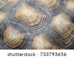 Stock photo turtle shield animal pattern 733793656