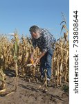 Small photo of Farmer or agronomist examining corn plant in field after drought, harvest time