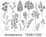 vector floral set  flowers... | Shutterstock .eps vector #733817200