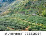 tea plantation in mountain view. | Shutterstock . vector #733818394