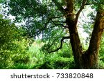 nature | Shutterstock . vector #733820848