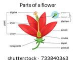 parts of flower.   Shutterstock .eps vector #733840363