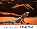 lizard | Shutterstock . vector #733842769