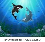 cartoon dolphin with killer... | Shutterstock . vector #733862350