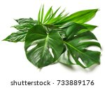 various tropical leaves... | Shutterstock . vector #733889176