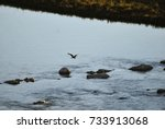 heron flying. birds in the... | Shutterstock . vector #733913068