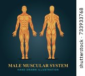 muscles in the body  vector.... | Shutterstock .eps vector #733933768