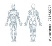 muscles in the body  vector....