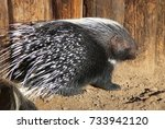 porcupine sunning itself in the ... | Shutterstock . vector #733942120