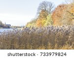 Autumn In Forest And Lake