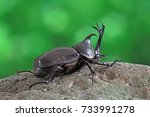 Beetles  Insects Bugs  ...