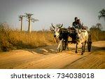 morondava  madagascar  ... | Shutterstock . vector #734038018