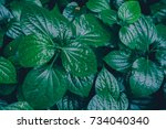 tropical green leaves texture... | Shutterstock . vector #734040340