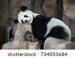 giant panda sleeping   chiang... | Shutterstock . vector #734053684