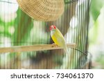birds in the cage | Shutterstock . vector #734061370