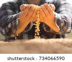 farmer holding corn grains in...   Shutterstock . vector #734066590